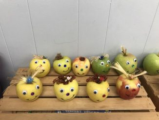 Baby apples line the bookshelf waiting to be adopted at Girdler.